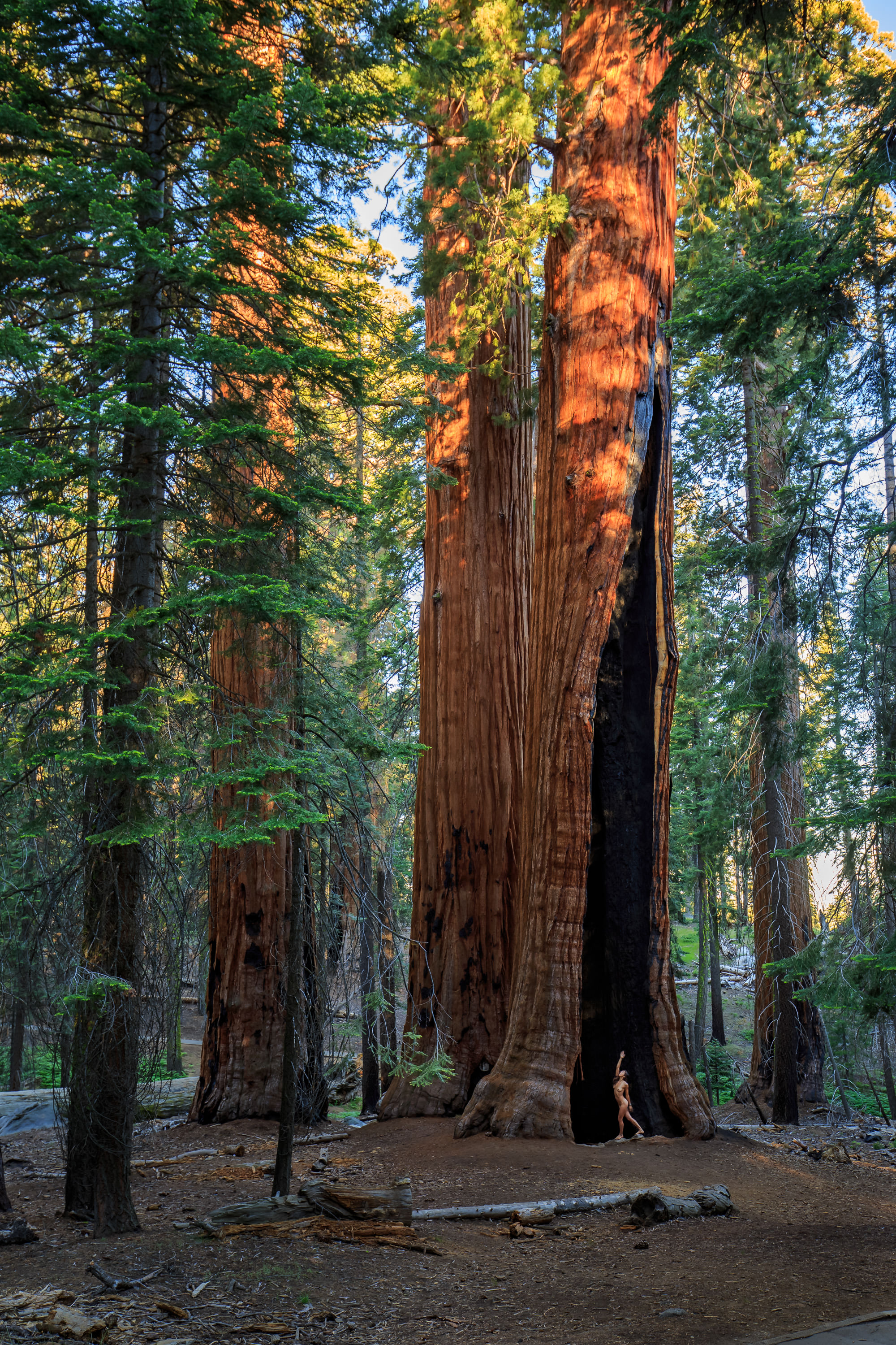 sequoia-national-forest-nude-art-10
